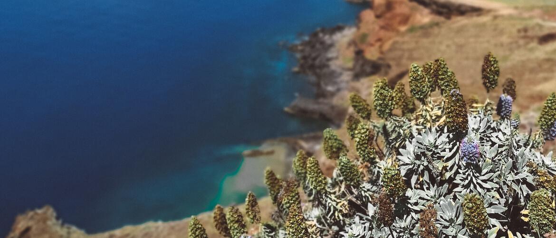Te-un-tur-blogs-celosana-madeira-blogs-celo-uz-madeiru-madara-senkane-4